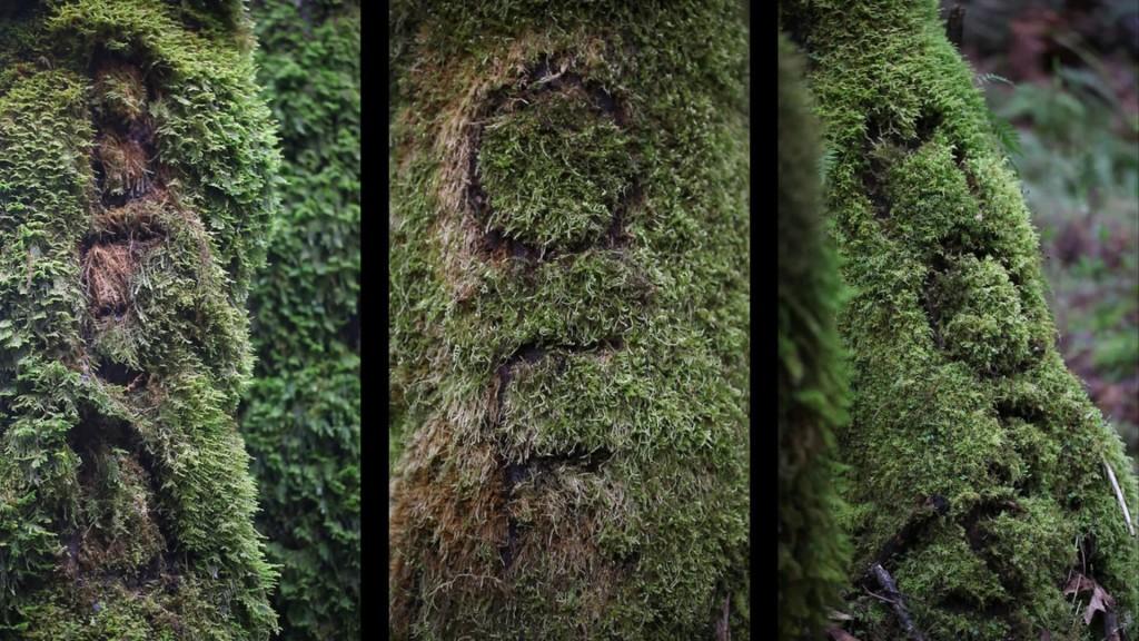 new filmmaker Kurtis Hough: Bed of Moss